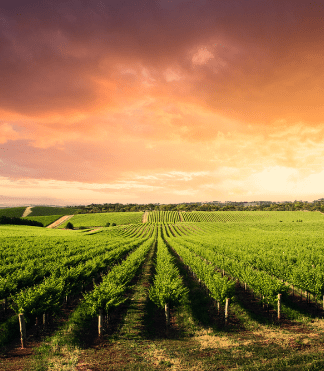 HARO Gage sur stock viticulture secteur viticole