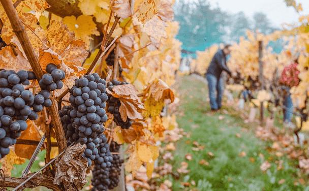 Gage sur stock et monde viticole